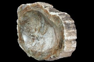 "Buy 8.5"" Polished Madagascar Petrified Wood Dish - Madagascar - #83065"