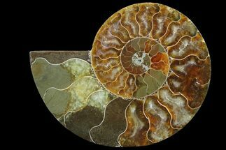 "Buy 3.4"" Agatized Ammonite Fossil (Half) - Madagascar - #83812"