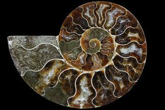 "3.3"" Agatized Ammonite Fossil (Half) - Madagascar For Sale, #83837"