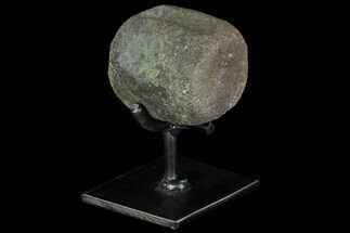 "Buy 2.2"" Achelousaurus Vertebrae With Metal Stand - Montana - #85330"