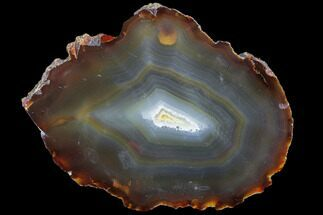 "7.7"" Polished Brazilian Agate Slice For Sale, #85166"