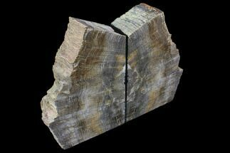 "Buy 7.2"" Tall, Petrified Wood Bookends - Oregon - #85987"