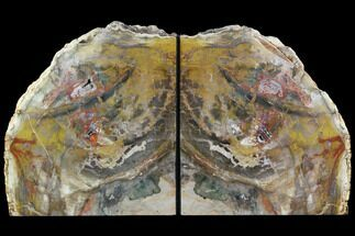 "Buy 7.3"" Tall, Colorful Petrified Wood Bookends - Madagascar - #87601"