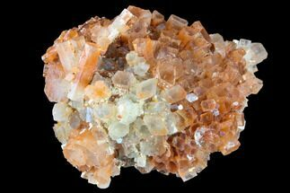 "Buy 2.75"" Aragonite Twinned Crystal Cluster - Morocco - #87784"