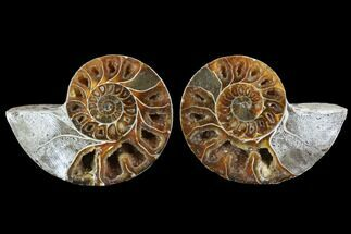 "Buy 3.5"" Cut & Polished Ammonite (Anapuzosia?) Pair - Madagascar - #88021"