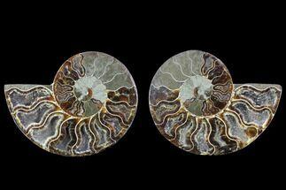 "Buy 4.35"" Cut & Polished Ammonite Fossil - Crystal Chambers - #88201"