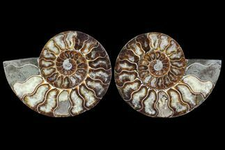 "Buy 5.6"" Cut & Polished Ammonite Pair - Agatized - #88387"