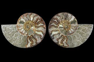 "5.6"" Cut & Polished Ammonite Fossil - Agatized For Sale, #88391"