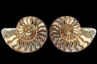 "Buy 5.8"" Cut & Polished Ammonite Fossil - Agatized - #88432"