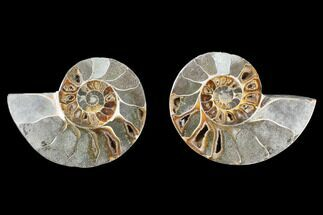 "Buy 3.8"" Cut & Polished Ammonite (Anapuzosia?) Pair - Madagascar - #88015"