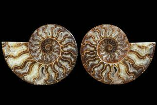 "Buy 6.25"" Cut & Polished Ammonite Fossil - Agatized - #91180"