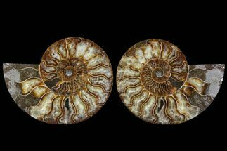 "Buy 6.25"" Cut & Polished Ammonite Fossil - Agatized - #91186"