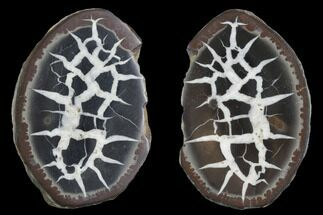 Septarian - Fossils For Sale - #91257