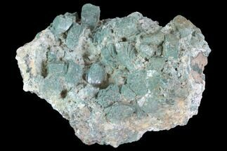 "Buy 3.6"" Green Heulandite Crystal Cluster - India - #91318"
