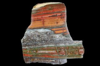 "Buy 3.6"" Stromatolite Slice - Pilbara, Australia (2.7 Billion Years) - #92647"