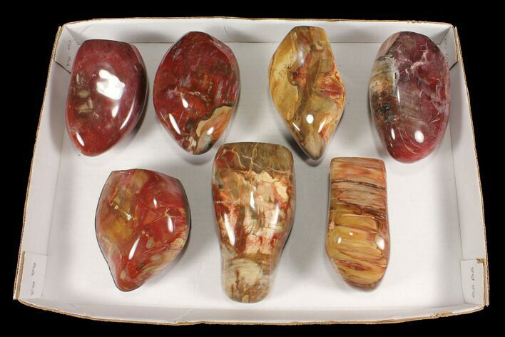 Wholesale Lot: 12.5 Lbs Polished Petrified Wood - 7 Pieces
