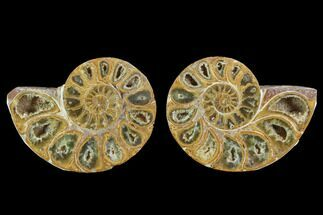 "Buy 3.35"" Cut & Polished, Agatized Ammonite Fossil - Jurassic - #93535"