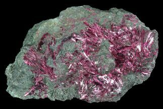 "2.8"" Vibrant, Magenta Erythrite Crystals - Morocco For Sale, #93596"
