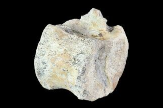 Unidentified Hadrosaur - Fossils For Sale - #93222