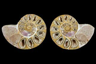 "Buy 3.1"" Cut & Polished, Agatized Ammonite Fossil - Jurassic - #93529"