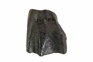 "Buy .62"" Triceratops Shed Tooth - Montana - #93136"