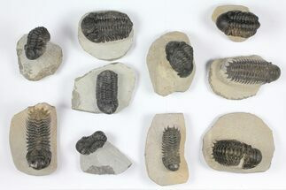 Various - Fossils For Sale - #92157