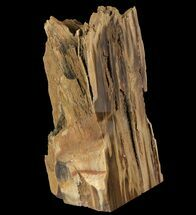 "Buy 6.3"" Tall Petrified Wood (Sequoia) With Polished Face - Oregon - #93934"