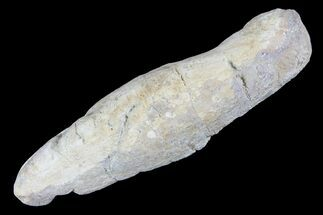 Unknown Fish - Fossils For Sale - #93777