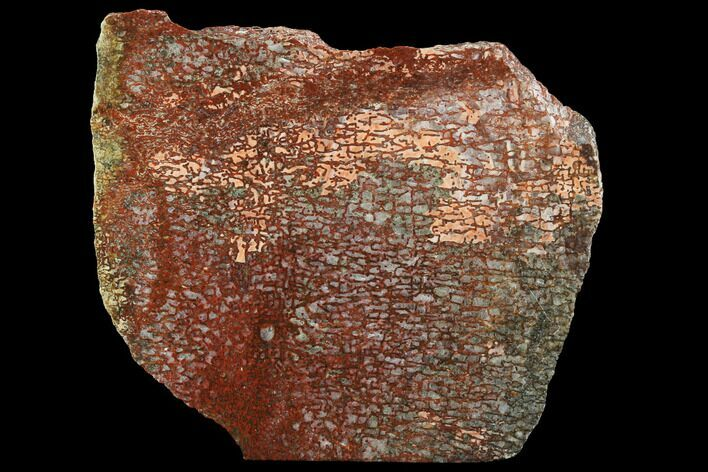 "3.8"" Bright Red, Agatized Dinosaur Bone (Gembone) Slab"