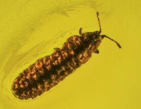 Fossil Larva In Baltic Amber For Sale, #93821