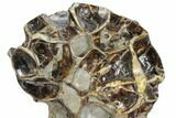 "13.5"" Polished Septarian ""Spiderweb"" Sculpture (44 lbs) - #93160-4"