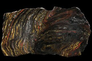 "11.9"" Polished Tiger Iron Stromatolite - (2.7 Billion Years) For Sale, #96233"