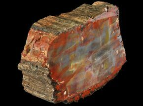 "Buy Thick, Polished Arizona Petrified Wood Section - 6.3"" - #94543"