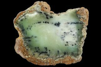 "Buy 4"" Polished Dendritic Opal (Moss Opal) Slab - Australia - #96277"