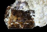 Brown Dravite Tourmaline Crystal Cluster in Mica - Australia - #96309-2