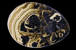 "2.1"" Polished Schalenblende Cabochon - Poland For Sale, #96752"