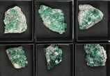 Wholesale Flat: Green, Fluorescent Rogerley Fluorite - 12 Pieces - #97148-1