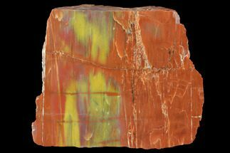 "Buy 6.1"" Wide, Polished Petrified Wood Section - Arizona - #98395"
