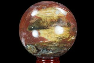 "Bargain, 3.7"" Colorful, Petrified Wood Sphere - Madagascar For Sale, #98459"