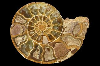 "2.9"" Sliced, Agatized Ammonite Fossil (Half) - Jurassic For Sale, #100553"