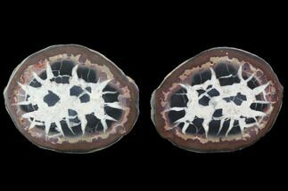 "2.7"" Cut/Polished Septarian Nodule Pair - Morocco For Sale, #101222"