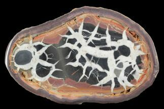 "3.6"" Cut/Polished Septarian Nodule Half - Morocco For Sale, #101288"