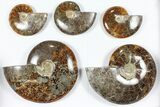 "Wholesale Lot: Polished Ammonites (3.6 - 6.6"") - 10 Pieces - #101601-1"