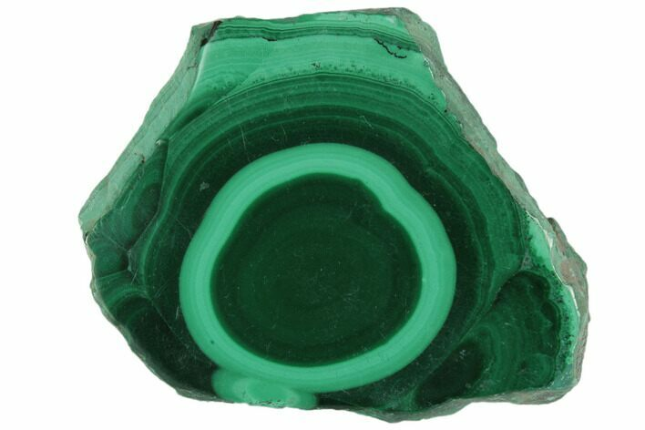 "1.4"" Polished Malachite Stalactite Slice - Congo"