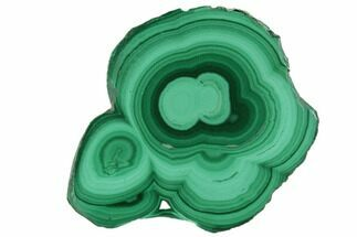 "1.3"" Polished Malachite Stalactite Slice - Congo For Sale, #101942"