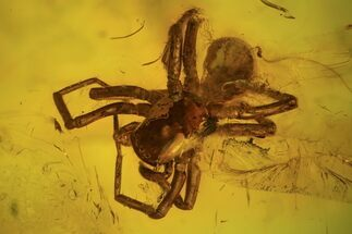 Detailed Fossil Spider, Springtail And Fly In Baltic Amber For Sale, #102776