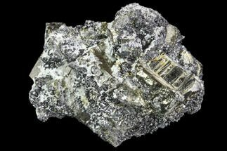 Pyrite & Sphalerite - Fossils For Sale - #102555