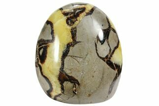 "3.4"" Polished Septarian Free Form Sculpure - Madagascar For Sale, #103028"