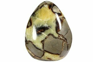 Septarian - Fossils For Sale - #103035
