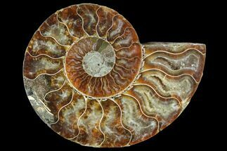 Cleoniceras - Fossils For Sale - #103086
